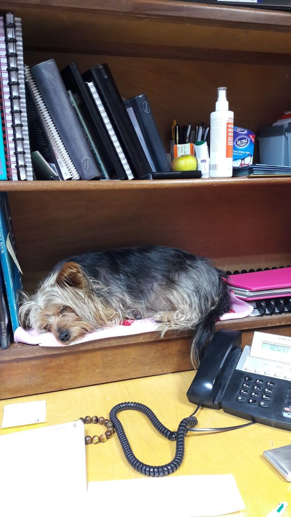 A dog in the office can help relieve stress in the office.